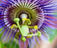 Floral Scents, Soy Melts