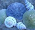 Clean, Marine and Spa Scents, Soy Clamshells