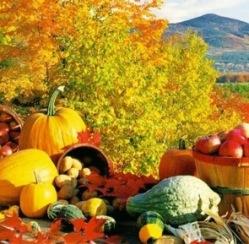 New Autumn Scent – Fall Festival